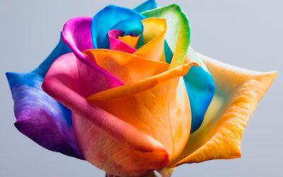 Rainbow Summer Roses